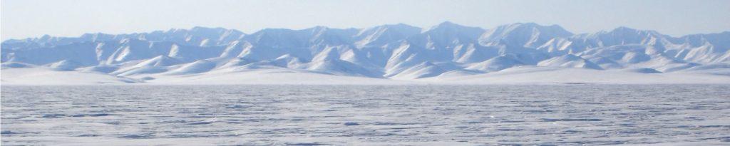 How Many Penguins Do Polar Bears Eat?