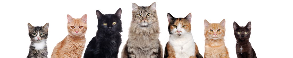 Create Campaigns That Are the Cat's Meow